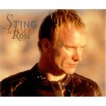 Фото Sting - Desert Of Rose (feat. Cheb Mami)