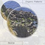 Фото Organic Patterns - Symbiosis