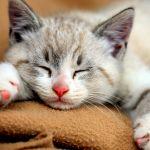 Фото Колыбельные сна - Сон и отдых