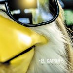 Фото El Capon - Shut up Chicken